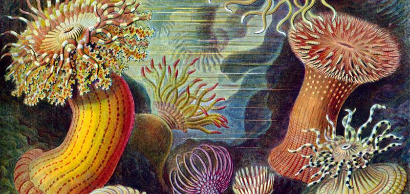 Contes des sages gardiens de la mer